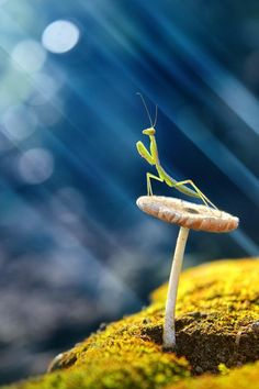 Everybody like kung fu fighting my praying mantis
