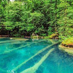 This is a wonderful place.  #blausee #blauseelake #blausee_lake #lake #tree #swiss #switzerland #amazingplace #amazingswitzerland #inlovewithswitzerland #exploringtheglobe #exploretheworld #explorenature #exploring #nature #blue #green #water #outdoor #places_wow #aweso#inlovewithswitzerland #awe#explorenature #ig_nature #photooftheday #photopedropetiz