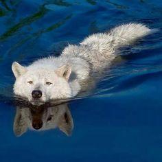 Une petite baignade...