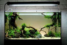 Perfect Detailing par GauthieRC. #aquascaping #aquarium #fishtank