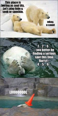 Funny pictures about Polar bear fun. Oh, and cool pics about Polar bear fun. Also, Polar bear fun photos. Funny Shit, Haha Funny, Funny Cute, Funny Stuff, Funny Things, Random Stuff, Crazy Things, Stupid Stuff, Wild Things