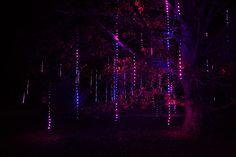 Beautiful forest // Lightswitch, Inc.