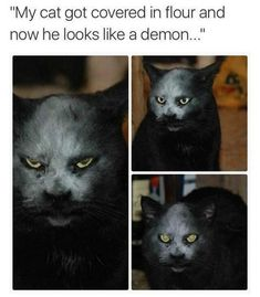 Demon cat