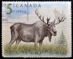 14596879-canada--circa-1997-a-stamp-printed-in-canada-shows-a-moose-orignal-circa-1997.jpg (1200×969)