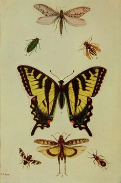 heaveninawildflower:  Frontispiece illustration showing representatives of the seven principal orders of insects (Orthoptera, Diptera, Hemiptera, Lepidoptera, Coleoptera, Hymenoptera, Neuroptera). From 'Entomology in Outline' by John Isaac. Published 1906.Smithsonian Libraries  Biodiversity Heritage Library.  archive.org