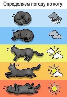 To determine the weather with the help of cats - susay - Tiere - Katzen I Love Cats, Crazy Cats, Cute Cats, Funny Cats, Funny Sleep, Cats Humor, Funny Jokes, Baby Animals, Funny Animals