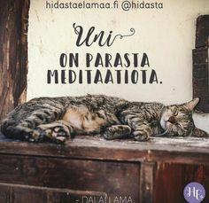 Uni on parasta meditaatiota ❤️ Oletko sinä samaa mieltä? Slow Living, Uni, Dalai Lama, Animals And Pets, Thoughts, Photo And Video, Healthy Lifestyle, Quotes, Pets