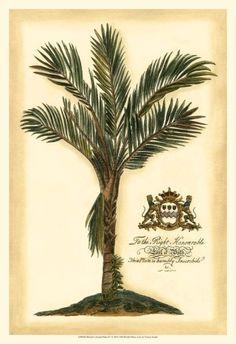 British Colonial Palm IV Art Print