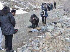 Suriye'de BM heyetine bombalı saldırı şoku..