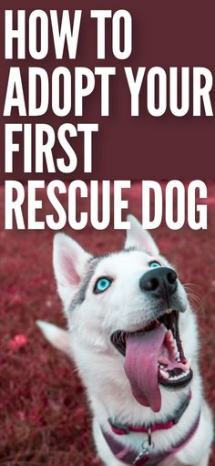 If you're looking to adopt a rescue dog or puppy from the shelter check out this guide for all the dog owner and dog training tips you need to know. Dog Training Videos, Training Your Puppy, Dog Breeds That Dont Shed, Dog Spay, Rescue Puppies, Guide Dog, Dog Walking, Dog Care, Dog Owners