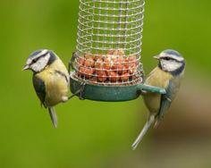 Feeding Wild Birds.