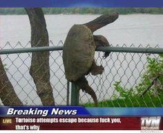 http://weknowmemes.com/wp-content/uploads/2012/06/tortoise-attemtps-escape1.jpg