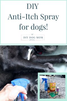 Related Posts DIY BBQ for Dogs DIY Holiday Gifts for Dog Lovers Living with & Caring for a Chronically Ill Dog Calendula: Healing Herb for Dog's Skin &. What Veggies & Herbs to Plant for Your Dog Dog Lover Gifts, Dog Gifts, Dog Lovers, Dog Itchy Skin Remedy, Dog Skin Allergies, Essential Oils Dogs, Coconut Oil For Dogs, Oils For Dogs, Dog Itching