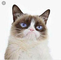 Grumpy Cat looking extra grumpy