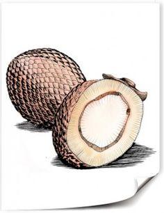 Fruits de Buriti