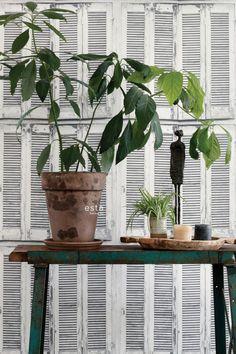 Greenhouse - Wallpaper