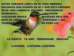 Colibri, colibri, colibri....