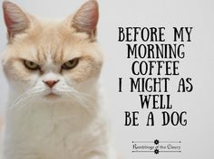 Before my morning coffee I might as well be a dog! #cat #dog #coffee #sarcasm #funny