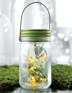 FIREFLIES IN A JAR - SPECIAL PRICE!