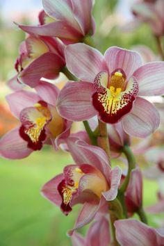 Lotus flowers/Water lilies/Orchids - Lotus bloemen/Water lelies/Orgideeën