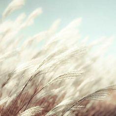 Gräser in Bewegung, eine tolle Stimmung