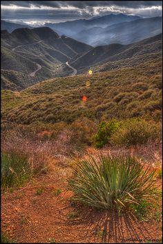 Los Padres National Forest California
