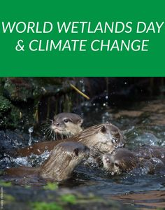 The Importance of Wetlands and How They Affect Climate Change  #WorldWetlandsDay