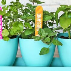 Free printable herb garden markers