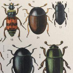 #antika #skalbaggar #planscher #tillsalu #auktion #tradera #nordicdesign #scandinaviandesign #swedishart #butterflyvintage