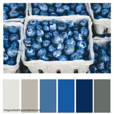 Beautiful Color Palettes for Your Next Projects