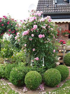 Stunning Rosen und Clematis Clerotiker Seite Rund um die Rose Mein sch ner