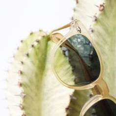 Today's the last day! Hurry in to shop new styles and killer colors from @oliverpeoples. Can't make it in? Pop over to the BLOG to get in on the fun!