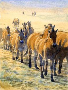 Ice Age Horses: ?? - Hipparion;  Mid Miocene to Pleistocene (23–0.781 Ma); Mammalia (perissodactyla); OR  Equus; Early Pleistocene to Recent (1.8–0 Ma); Mammalia (perissodactyla); Described by Described by Linnaeus, 1758De Christol, 1832; Artwork by Måns Sjöberg