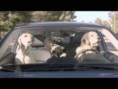 What's the Fuss About - Subaru Dog Commercial from Subaru South Blvd - YouTube