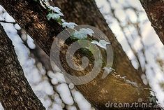winter-coming-there-few-plants-green-forest-browning-cool-atmosphere Winter Coming, Browning, Nature Photos, Hiking Boots, Green, Plants, Planters, Brown Colors, Plant
