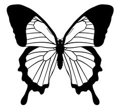 how to draw a butterfly step by step realistically Principles Of Art Balance, Balance Art, Balance Design, Principles Of Design, Butterfly Outline, Butterfly Stencil, Butterfly Drawing, Butterfly Template, Monarch Butterfly