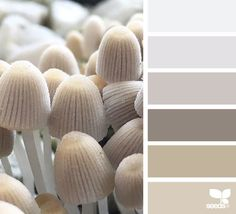 { nature tones } image via: @piensaar  #color #palette #colorpalette #pallet #colour #colourpalette #design #seeds #designseeds Inspiration for a colour scheme in neutral beige with a slightly green undertone