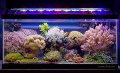 Razarmi Full Reef Tank Shot at nano-reef.com