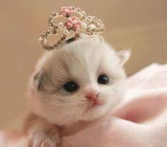 The little princess.