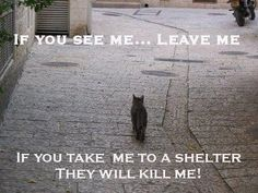 I see so many scared and feral cats being dumped at the shelters. Not adoptable so they face certain death. Please, if you see a feral cat leave it alone. Contact your local feral cat group and let them know about the cat(s.) If you are willing, please feed and water these cats. Trap them and have them spayed or neutered and return them to their home.