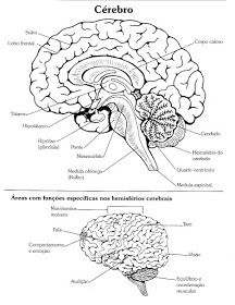 Sign Language Alphabet, Study Notes, Brain, Posters, Desk, Human Brain Anatomy, Cardiac Anatomy, Anatomy Bones, Pineal Gland