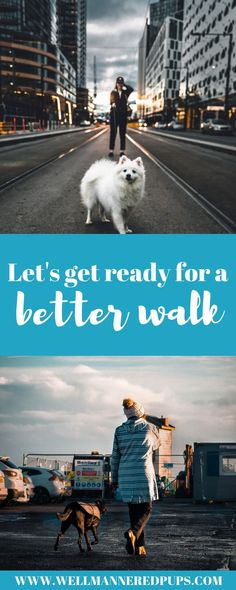 Who's walking who? Leash Training, Best Dog Training, Dog Rash, Socializing Dogs, Dog Training Courses, Group Of Dogs, Hiking Dogs, Dog Care Tips, Dog Behavior