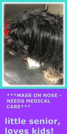 SUPER URGENT - 02/09/15 Manhattan Center FIFI - A1027514 ***MASS ON NOSE - NEEDS MEDICAL*** FEMALE, BLACK / TAN, YORKSHIRE TERR MIX, 13 yrs OWNER SUR - EVALUATE, NO HOLD Reason NO TIME Intake condition GERIATRIC Intake Date 02/08/2015 https://www.facebook.com/photo.php?fbid=958934927452720