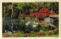 Bellingrath Gardens reflecting pool