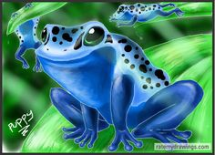 Dart Frog Paintings - Yahoo Image Search Results