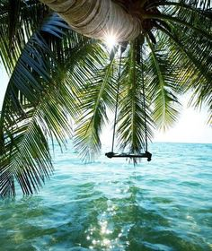 Coconut tree w/ a swing made of wood and rope. For swinging above the waters.