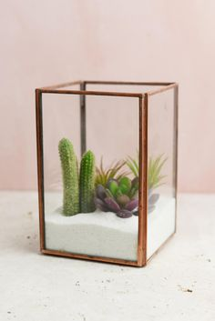 Glass Terrarium Display Case Copper Medium