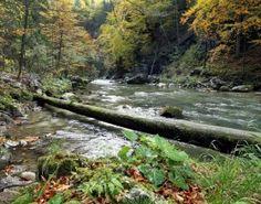 Einmalig ist die Natur im Naturpark Ötscher-Tormäuer, © weinfranz.at Waterfall, Outdoor, Communities Unit, Outdoors, Rain, The Great Outdoors, Waterfalls