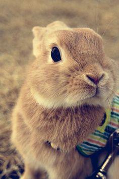 First reaction: awwww so cute! No lie. @CoatMyFox