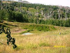 Escape To The Mountains! 20 Acre Parcel On Miner's Peak In The Nicholls Subdivision. Quarter-Share Of Water, Rights To Rusty Stove Improved Spring, Wooded Property, Lush Meadow Grasses, Quaking Aspens. Close To Oneil Gulch, Hunting & Fishing Areas Nearby.